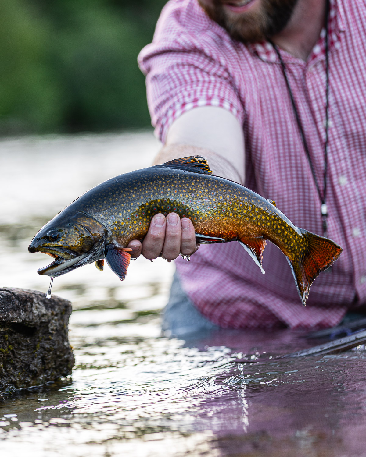 Fly Fishing Maine's Rapid River   Eastbound and Trout - photo#15