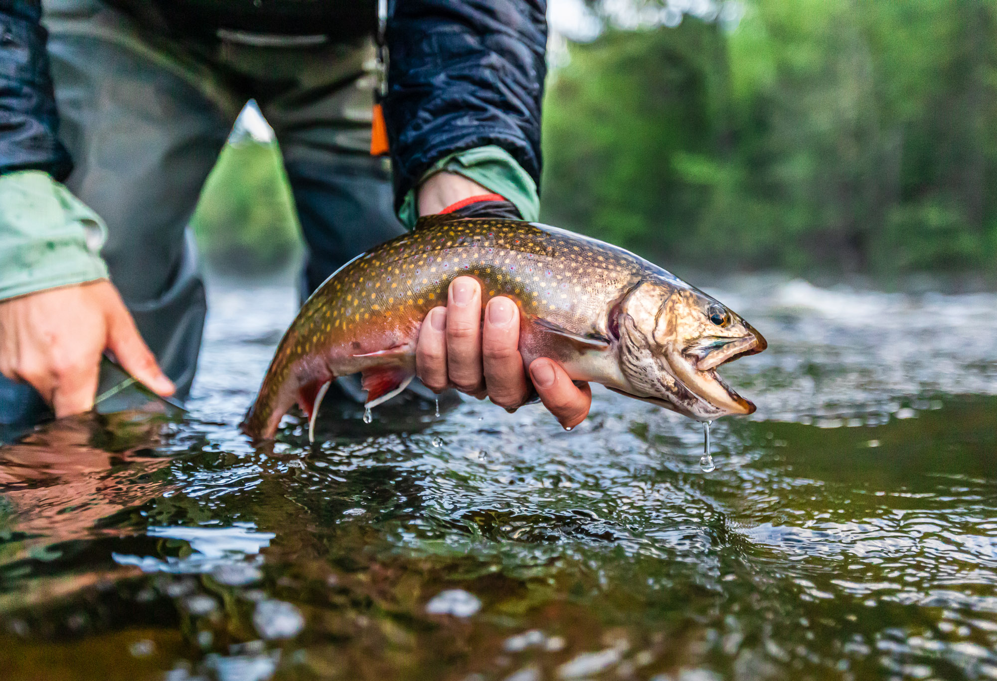Fly Fishing Maine's Rapid River   Eastbound and Trout - photo#45